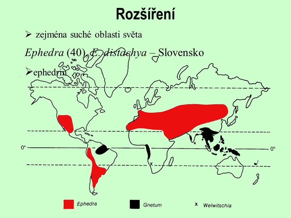 Rozšíření Ephedra (40), E. distachya – Slovensko ephedrin