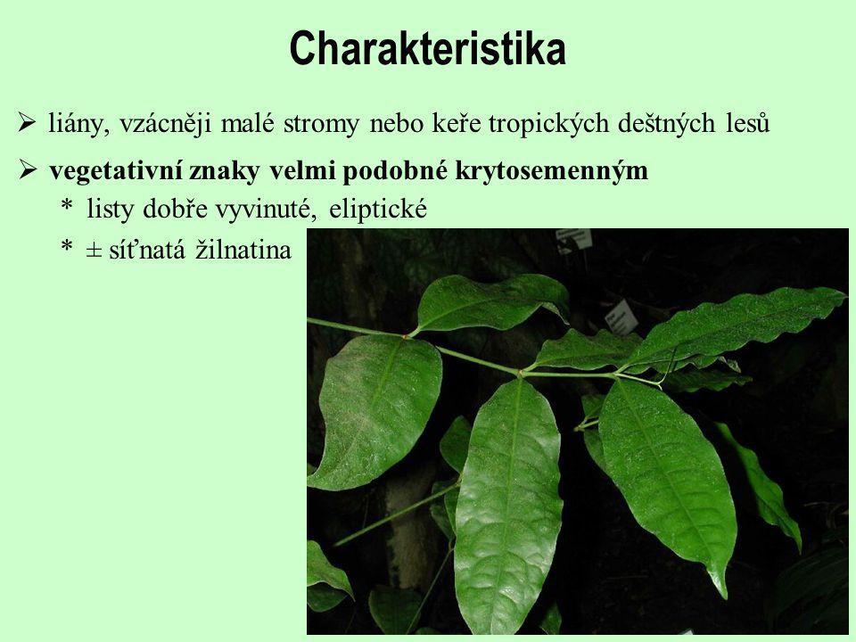 Charakteristika liány, vzácněji malé stromy nebo keře tropických deštných lesů. vegetativní znaky velmi podobné krytosemenným.