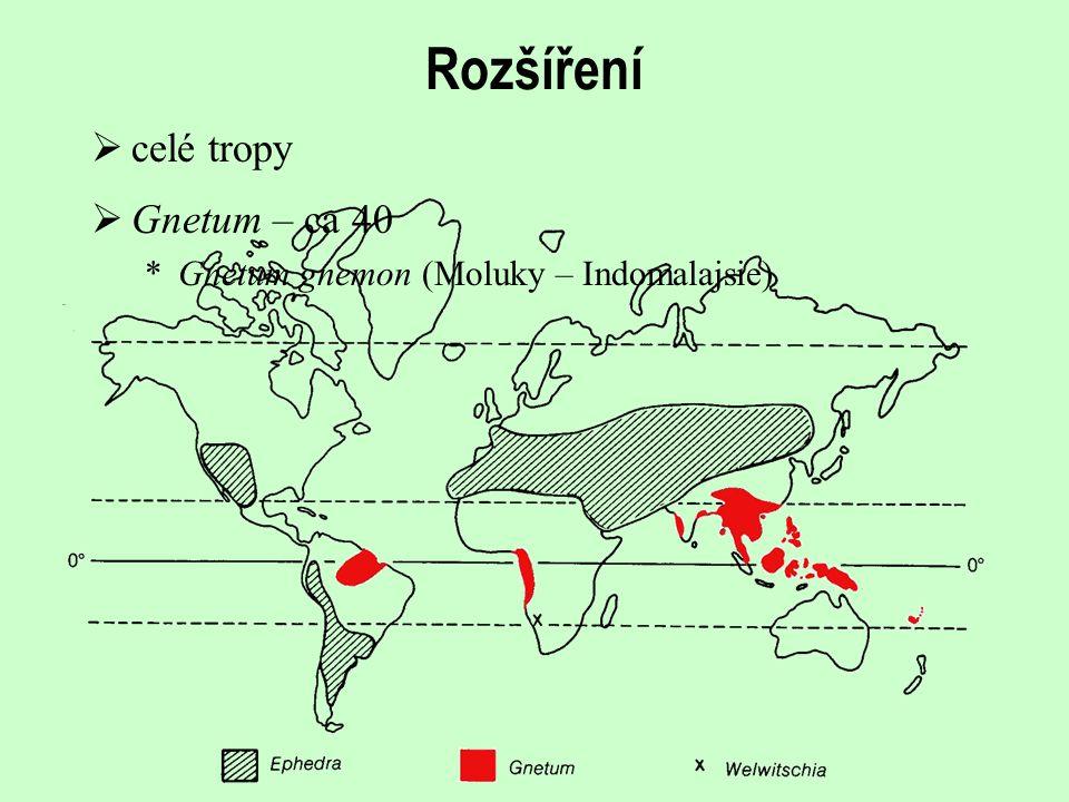 Rozšíření celé tropy Gnetum – ca 40