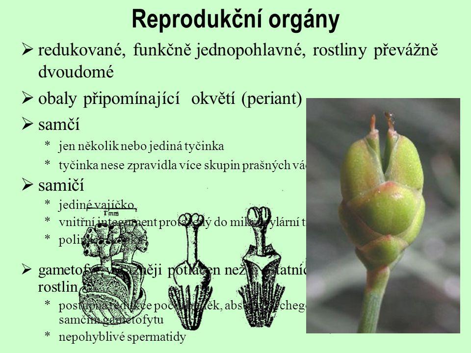 Reprodukční orgány redukované, funkčně jednopohlavné, rostliny převážně dvoudomé. obaly připomínající okvětí (periant)