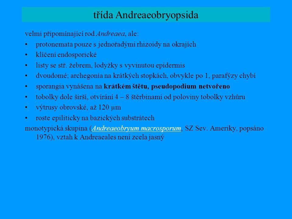 třída Andreaeobryopsida
