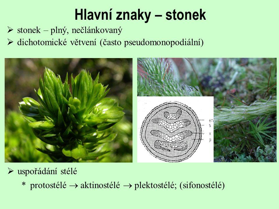 Hlavní znaky – stonek stonek – plný, nečlánkovaný