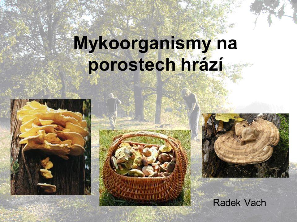 Mykoorganismy na porostech hrází
