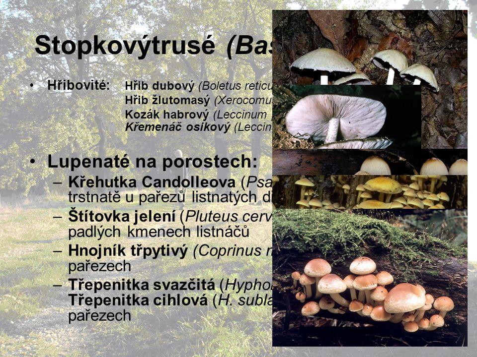 Stopkovýtrusé (Basidiomycetes)