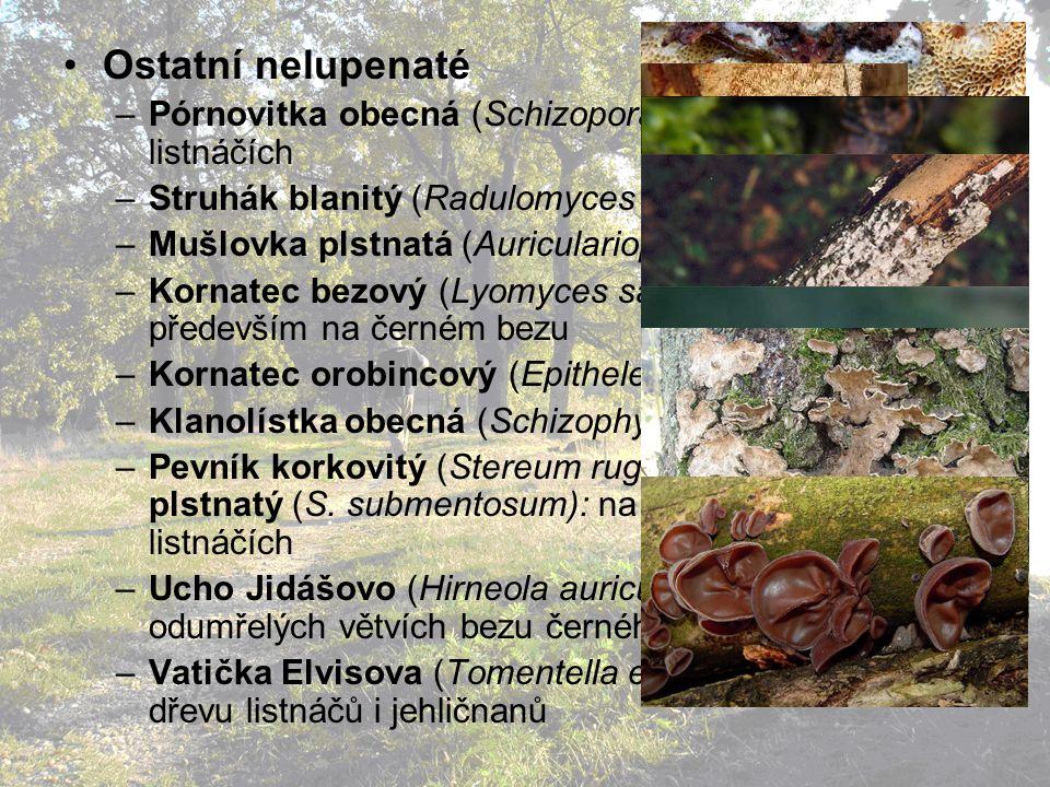 Ostatní nelupenaté Pórnovitka obecná (Schizopora radula): na listnáčích. Struhák blanitý (Radulomyces molaris): na listnáčích.