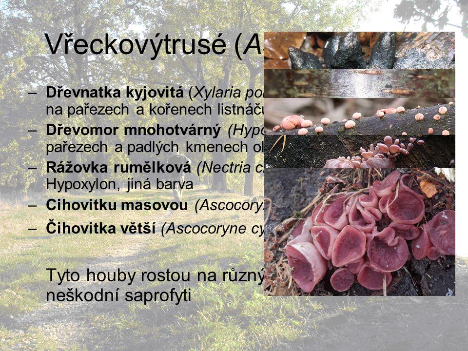 Vřeckovýtrusé (Ascomycetes)