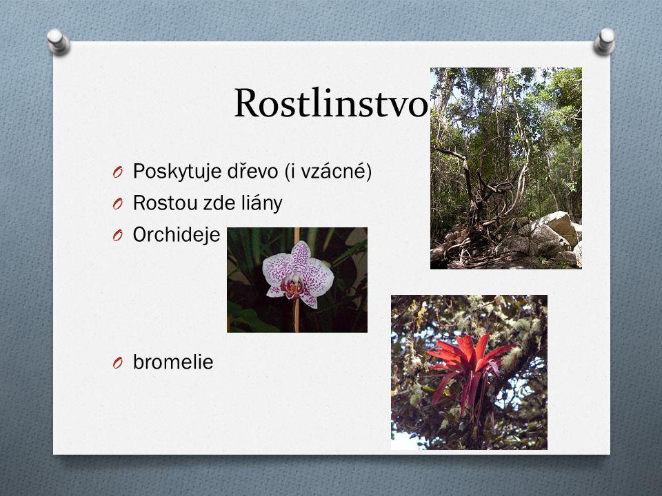 Rostlinstvo Poskytuje dřevo (i vzácné) Rostou zde liány Orchideje