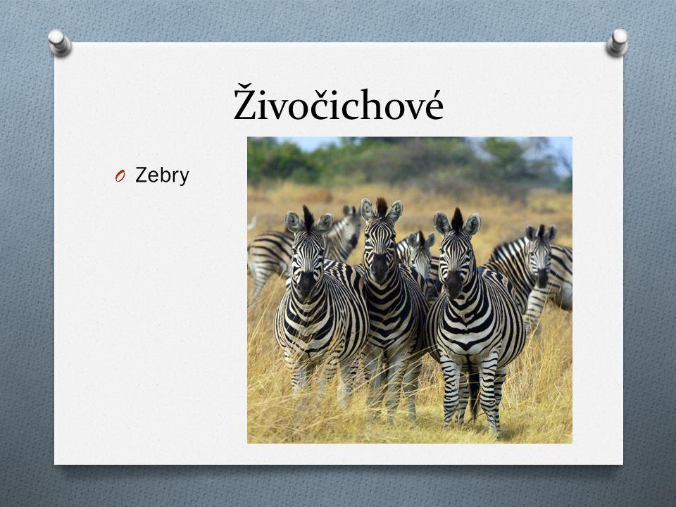 Živočichové Zebry