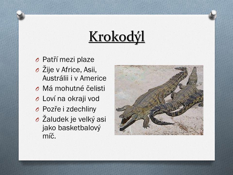 Krokodýl Patří mezi plaze Žije v Africe, Asii, Austrálii i v Americe