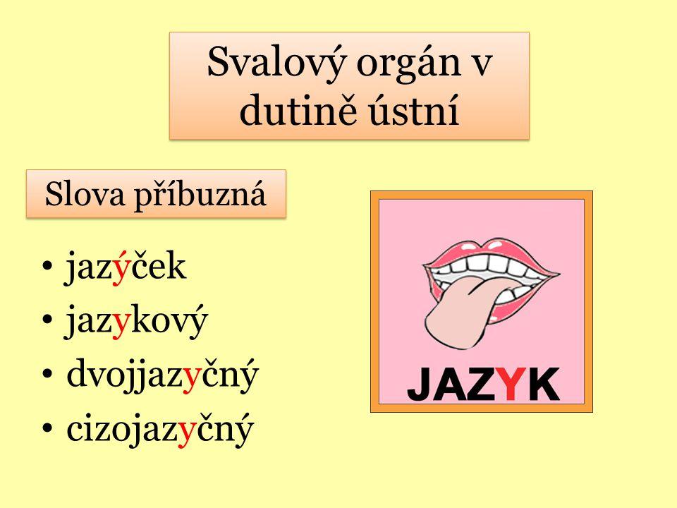 Svalový orgán v dutině ústní