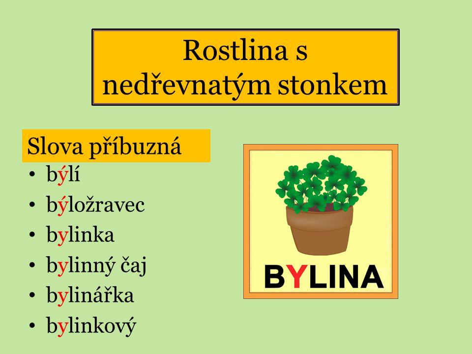 Rostlina s nedřevnatým stonkem