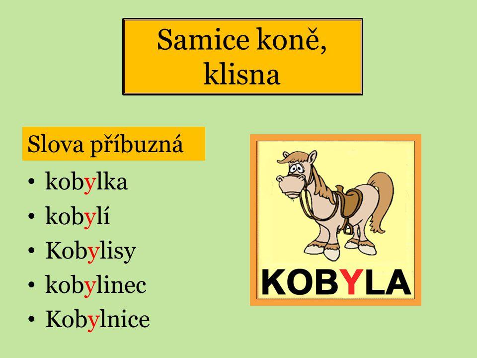 Samice koně, klisna Slova příbuzná kobylka kobylí Kobylisy kobylinec