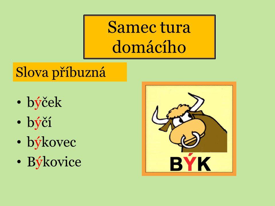 Samec tura domácího Slova příbuzná býček býčí býkovec Býkovice