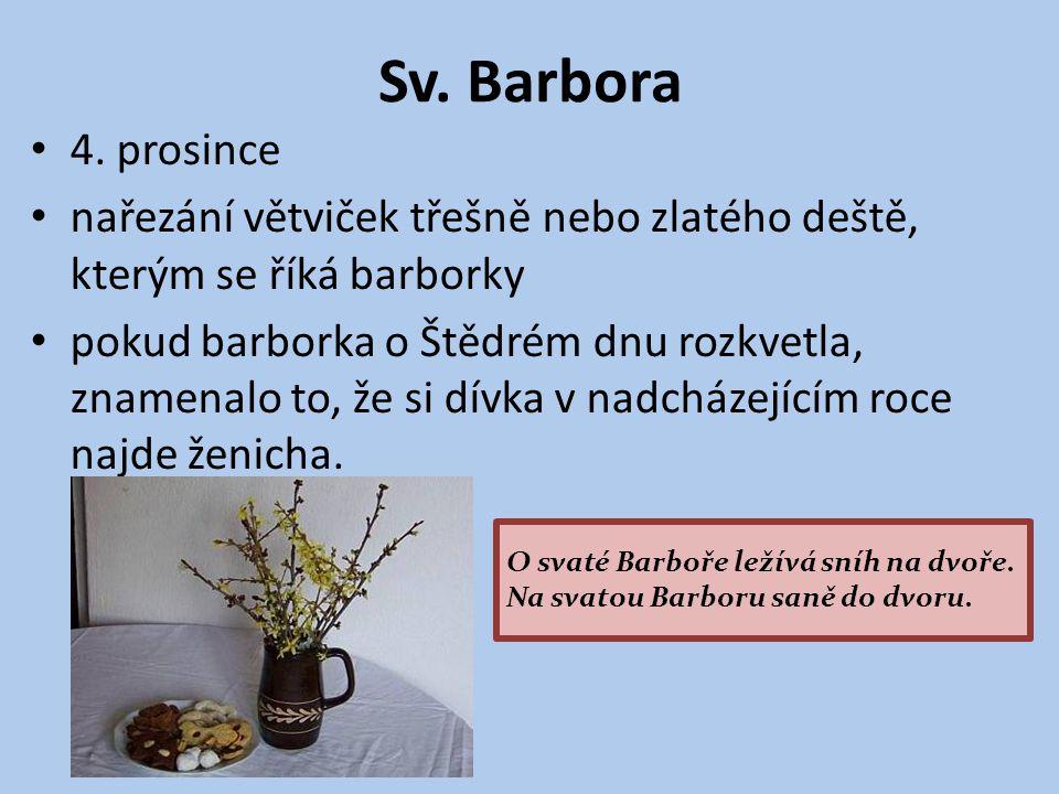 Sv. Barbora 4. prosince. nařezání větviček třešně nebo zlatého deště, kterým se říká barborky.