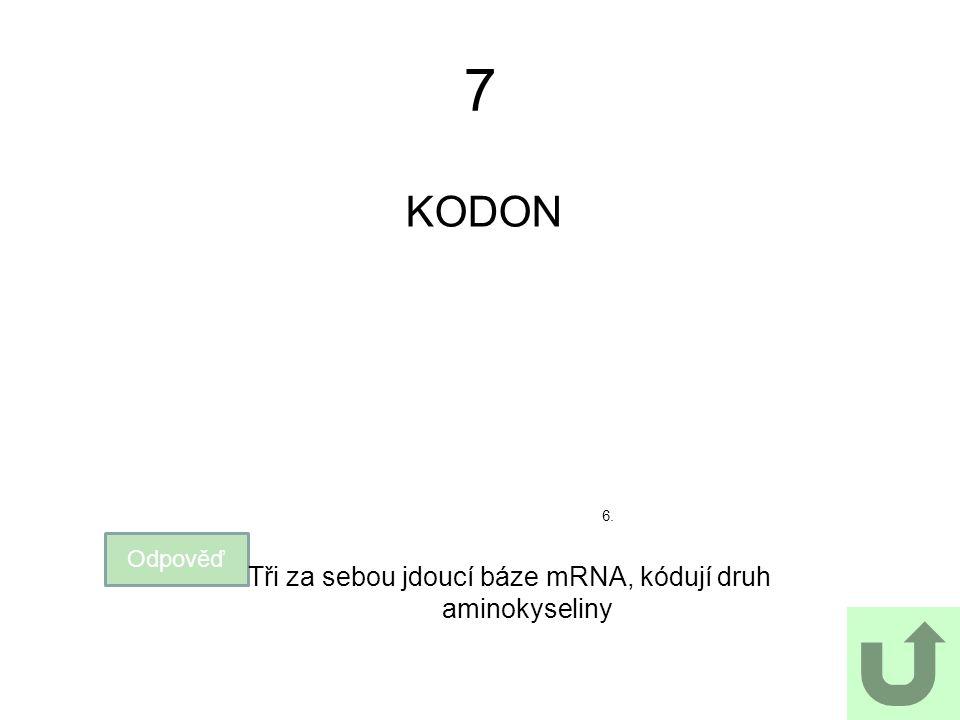 Tři za sebou jdoucí báze mRNA, kódují druh aminokyseliny