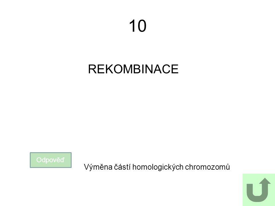10 REKOMBINACE Odpověď Výměna částí homologických chromozomů