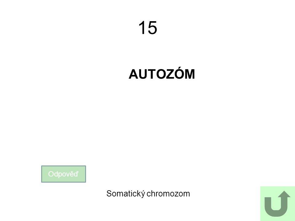 15 AUTOZÓM Odpověď Somatický chromozom