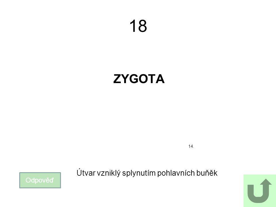 18 ZYGOTA 14. Útvar vzniklý splynutím pohlavních buňěk Odpověď
