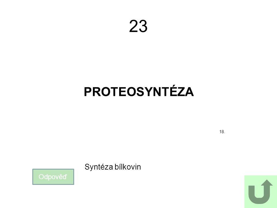 23 PROTEOSYNTÉZA 18. Syntéza bílkovin Odpověď