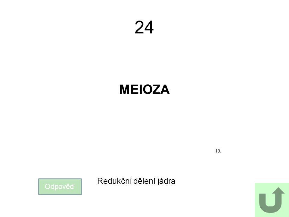 24 MEIOZA 19. Redukční dělení jádra Odpověď