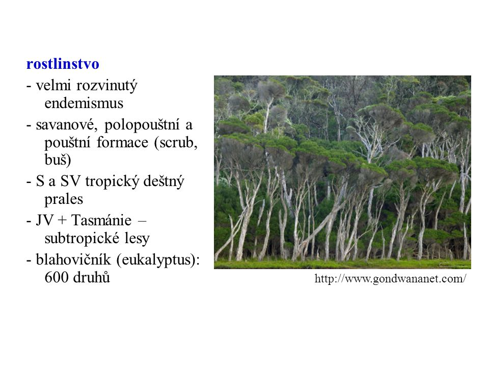 - velmi rozvinutý endemismus