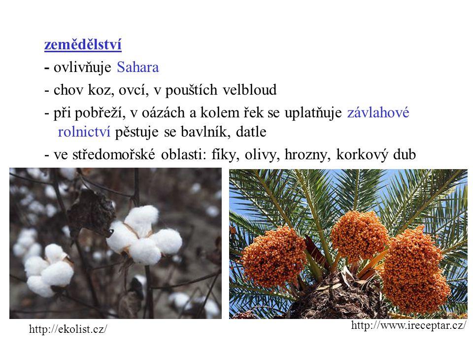 zemědělství - ovlivňuje Sahara - chov koz, ovcí, v pouštích velbloud - při pobřeží, v oázách a kolem řek se uplatňuje závlahové rolnictví pěstuje se bavlník, datle - ve středomořské oblasti: fíky, olivy, hrozny, korkový dub