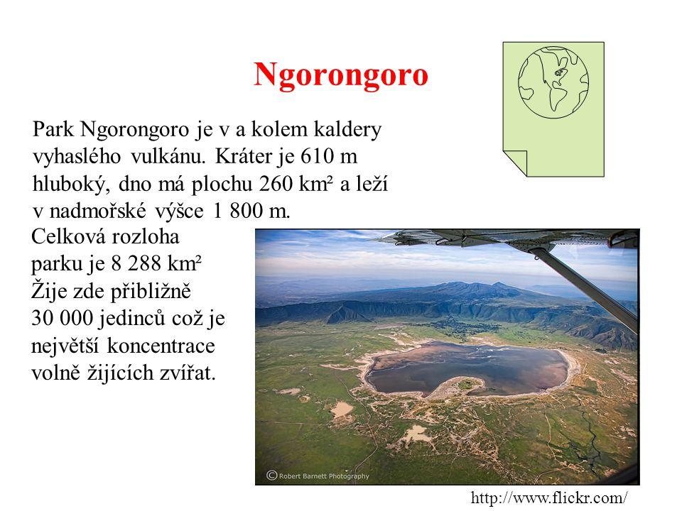 Ngorongoro Park Ngorongoro je v a kolem kaldery vyhaslého vulkánu. Kráter je 610 m hluboký, dno má plochu 260 km² a leží v nadmořské výšce 1 800 m.