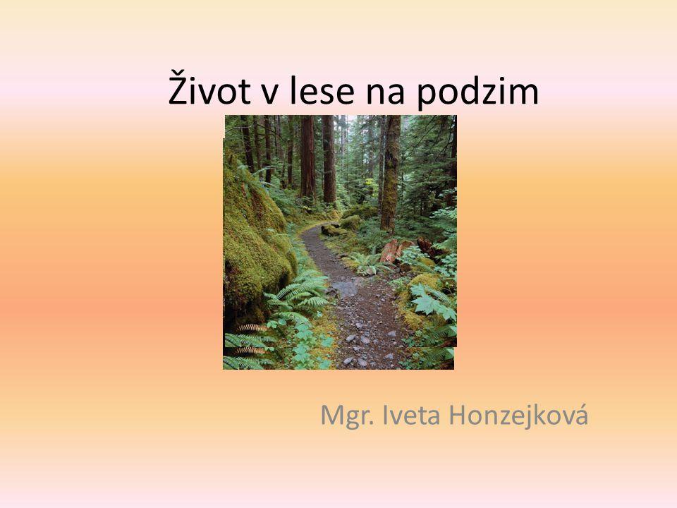 Život v lese na podzim Mgr. Iveta Honzejková