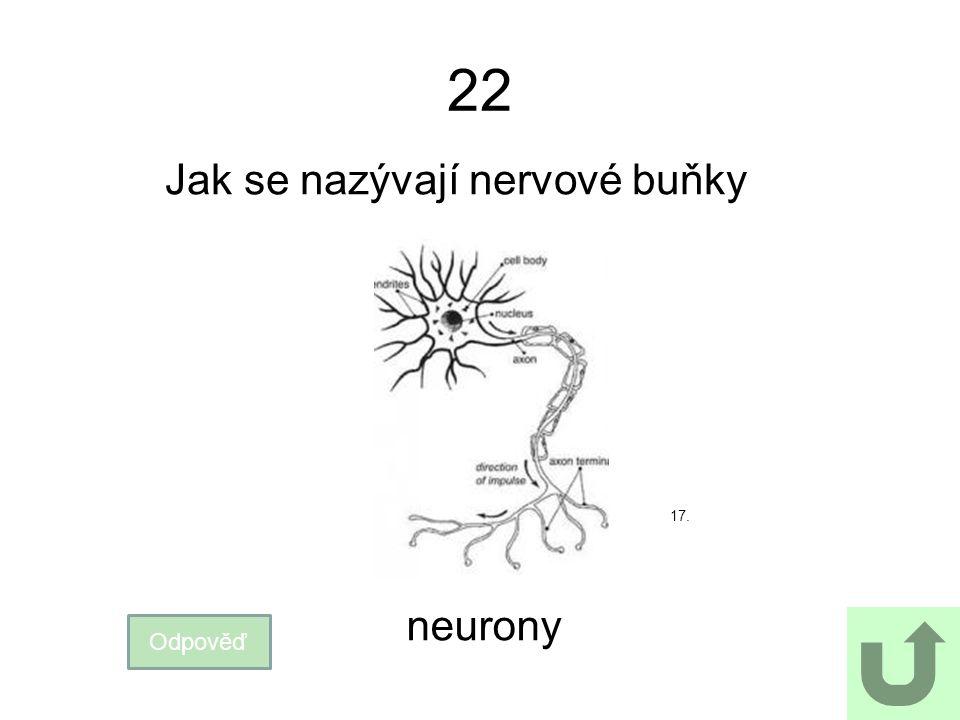 22 Jak se nazývají nervové buňky 17. neurony Odpověď