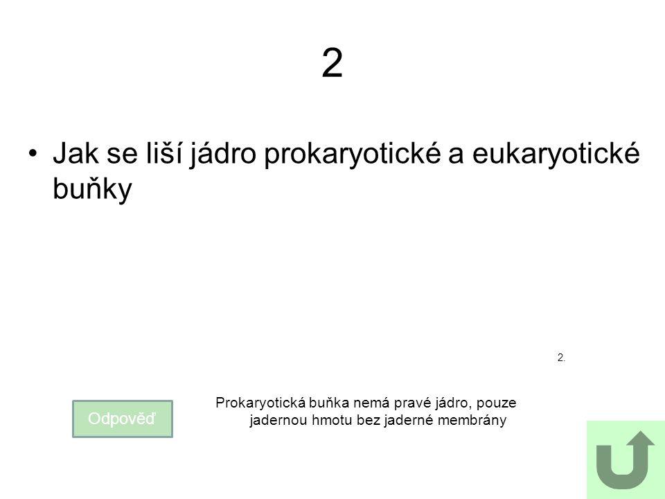 2 Jak se liší jádro prokaryotické a eukaryotické buňky Odpověď