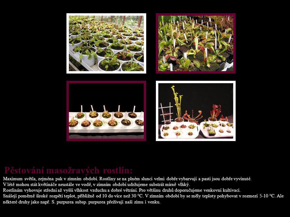 Pěstování masožravých rostlin: