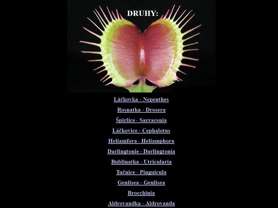 DRUHY: Láčkovka - Nepenthes Rosnatka - Drosera Špirlice - Sarracenia