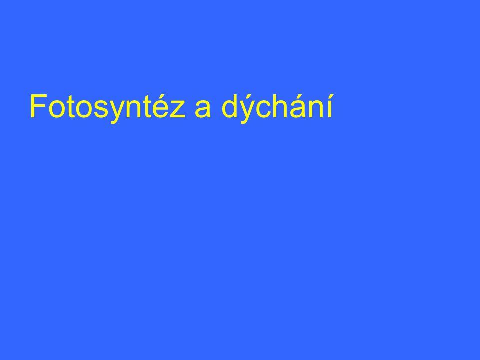 Fotosyntéz a dýchání