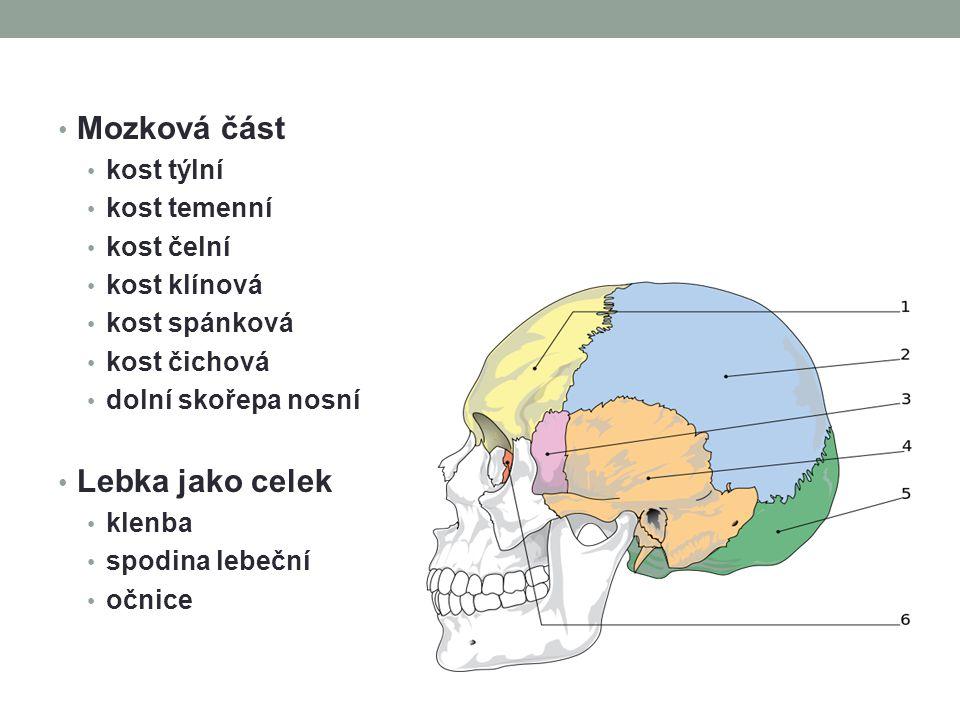 Mozková část Lebka jako celek kost týlní kost temenní kost čelní