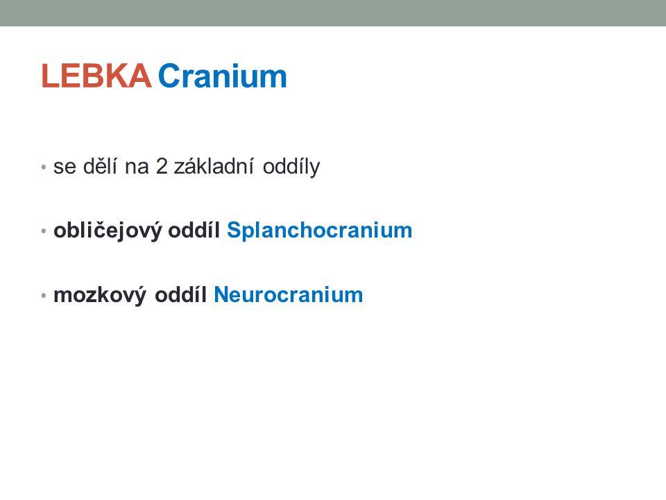 LEBKA Cranium se dělí na 2 základní oddíly