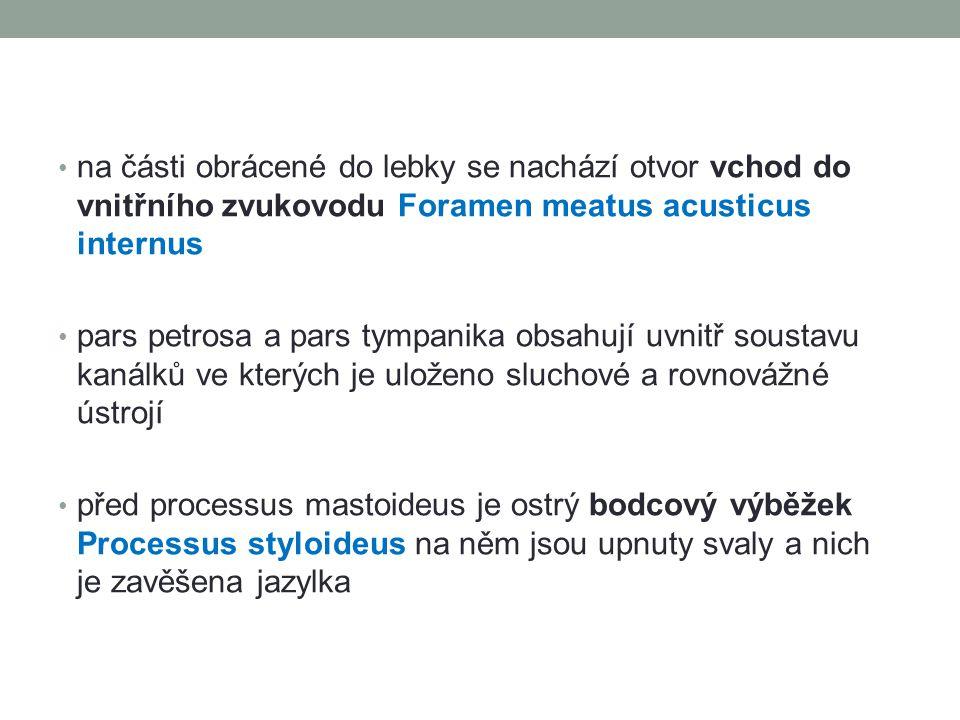 na části obrácené do lebky se nachází otvor vchod do vnitřního zvukovodu Foramen meatus acusticus internus