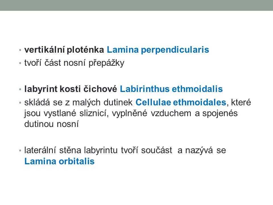vertikální ploténka Lamina perpendicularis