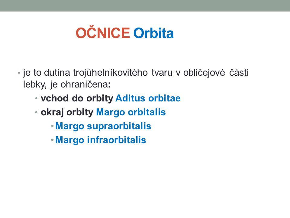 OČNICE Orbita je to dutina trojúhelníkovitého tvaru v obličejové části lebky, je ohraničena: vchod do orbity Aditus orbitae.