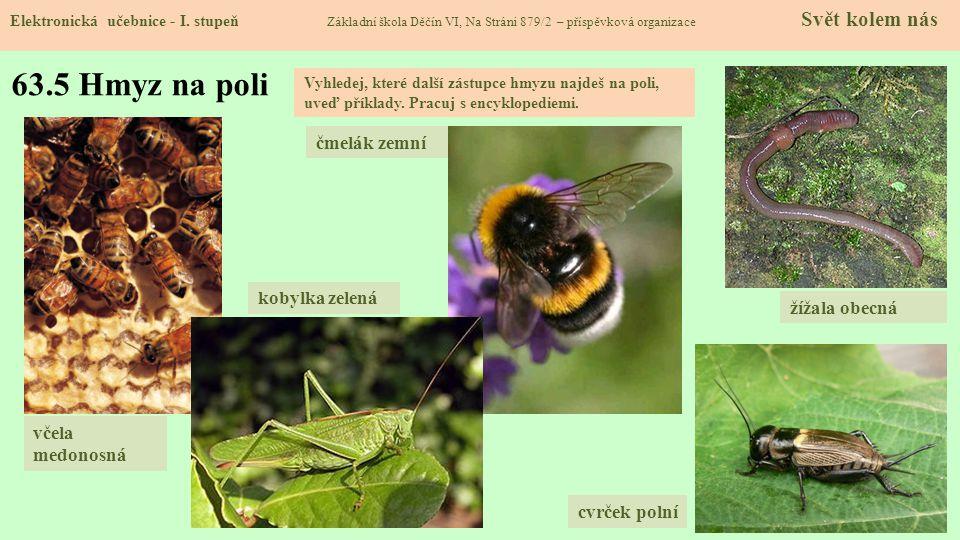 63.5 Hmyz na poli čmelák zemní kobylka zelená žížala obecná