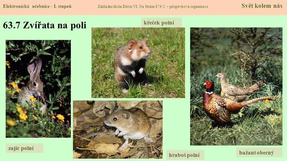 63.7 Zvířata na poli křeček polní zajíc polní bažant obecný