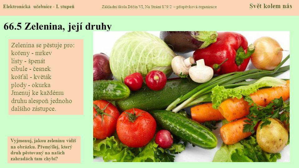 66.5 Zelenina, její druhy Zelenina se pěstuje pro: kořeny - mrkev