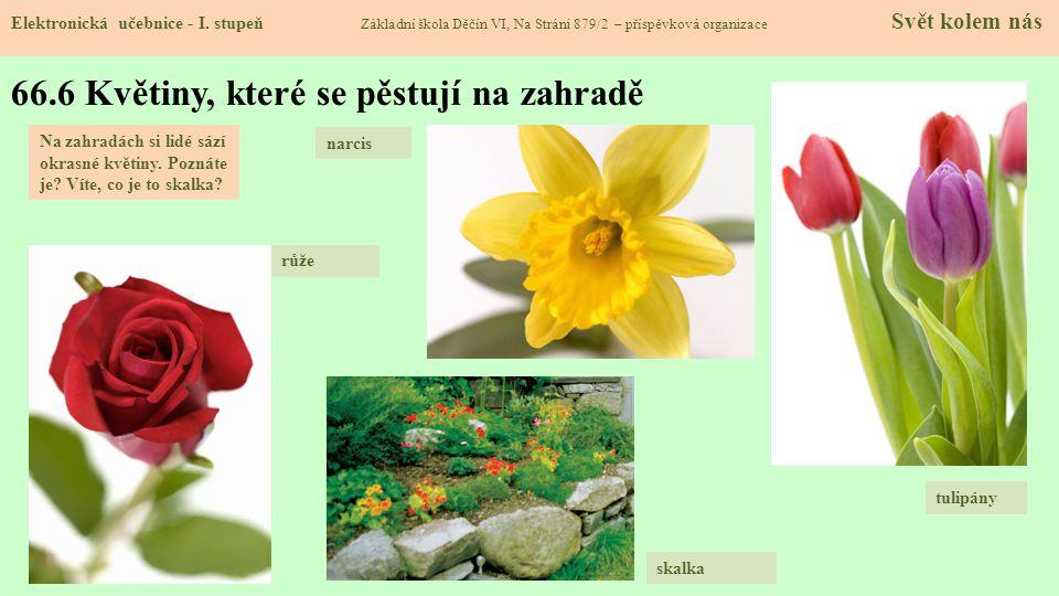 66.6 Květiny, které se pěstují na zahradě