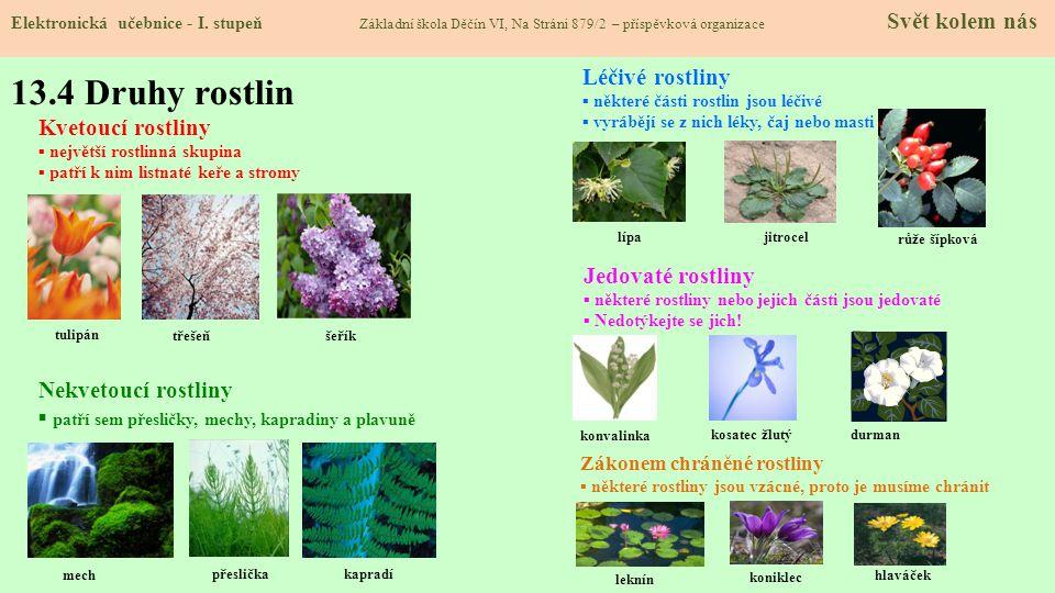 13.4 Druhy rostlin Léčivé rostliny Kvetoucí rostliny Jedovaté rostliny