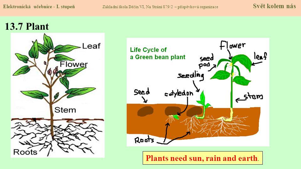 13.7 Plant Plants need sun, rain and earth.