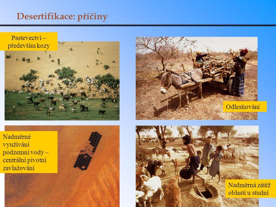 Pastevectví – především kozy