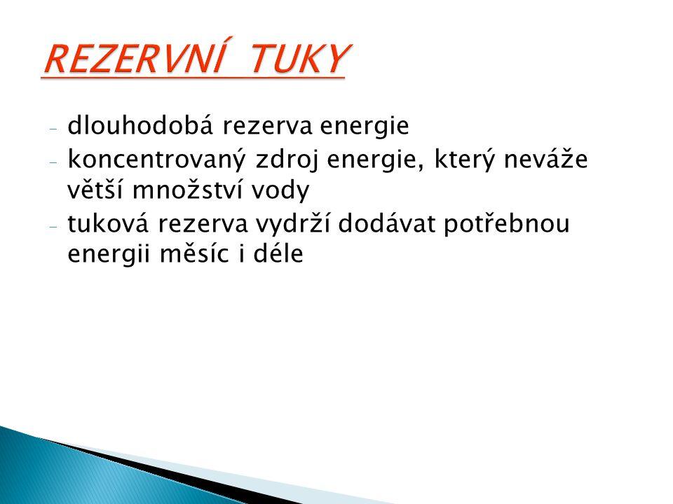 REZERVNÍ TUKY dlouhodobá rezerva energie