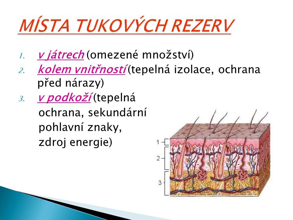 MÍSTA TUKOVÝCH REZERV v játrech (omezené množství)