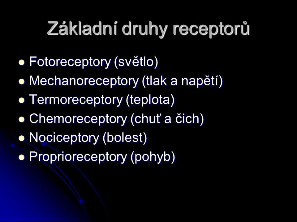 Základní druhy receptorů