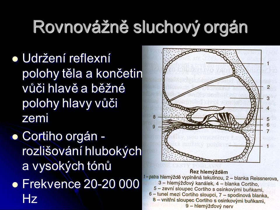 Rovnovážně sluchový orgán