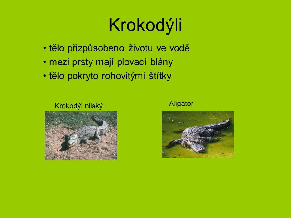 Krokodýli tělo přizpůsobeno životu ve vodě